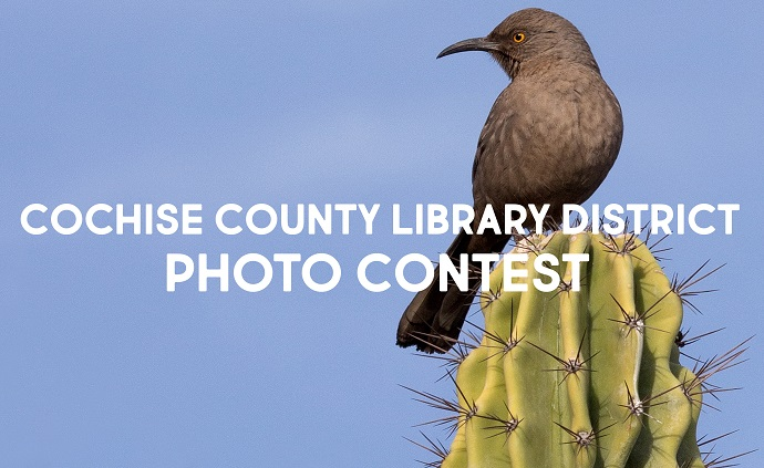 Photo contest promotion with bird